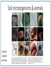 Lecture18-microbes-animals-2.pdf