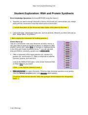 RNA Protein Synthesis SE Gizmo 2018 - http\/www ...