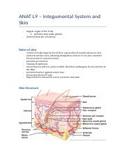 ANAT L9 – Integumental System and Skin.docx