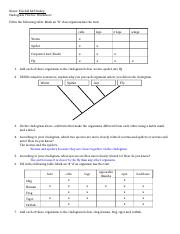 Cladogram_Worksheet.doc - Name Kendall McCluskey Cladogram Practice ...