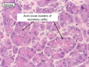 Histology Digestive Labeled W16