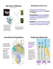 Bioc385i-Topic14-MembraneLipids.pdf