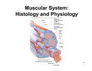 20. Muscle Physiology