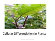cellular differentiation in plants