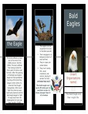 Bald Eagle Brochure
