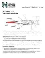 Belemnites February completed and checked by PDT 26th Feb 2015 (1).pdf