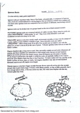 Igneous Rocks Handout