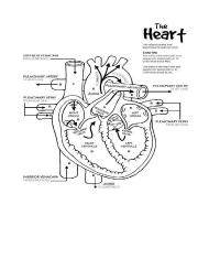 Heart Coloring _ Labeling.pdf