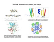 lecture 4-Protein structure and folding (1)
