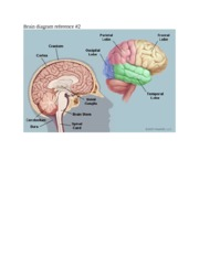 Brain diagram reference 2