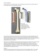 Ch 10 Femur Comparisons