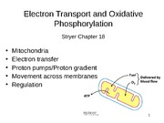 Lecture 12 Oxidative Phosphorylation