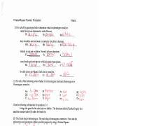 Punnett Square Practice Questions Answer Key Punnett Square