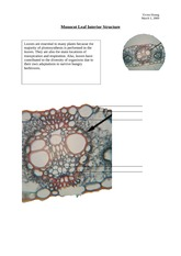 Microscope Diagrams - Leaf