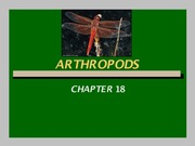 Chapter 18 - Arthropods - Notes