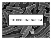 NUTR3210_Lecture 3 - Digestive Systems