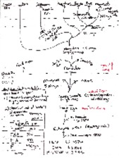 Notes on Phylogenetic Tree for Chordates
