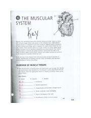 Muscular System Review_KEY - Answers Chapter 6 3| 3 Chapter 6 The ...