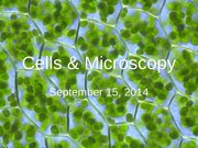 Sept 15 - Cells and Microscopy (1)