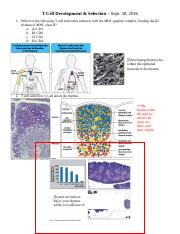 T Cell Development and Selection Sept 30.docx