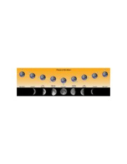 600px-Phases_of_the_Moon