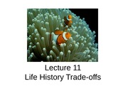 Lecture 11 - Life history trade-offs