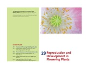 CHAPTER 29 ANGIOSPERM REPRODUCTION AND DEVELOPMENT