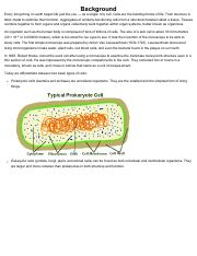 figure 2 diagram of typical cellular structures of eukaryotes image rh coursehero com Plant Cell Organelles Diagram Labels Plant Cell Diagram Labeled