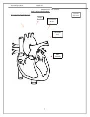Heart structure worksheet.docx