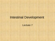 AnSci 5032 Intestinal Development Lec 7  2014