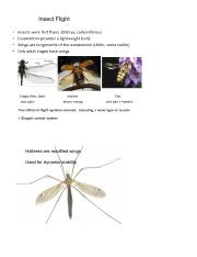 12 insect flight handout