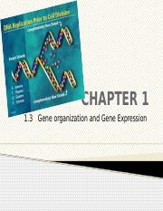 CHAPTER 1. PART 1.3 DNA replication, transcription and translation (1)