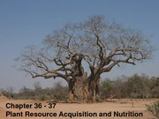 BIOL+172+10+Plant+Resource+Acquisition+and+Nutrition