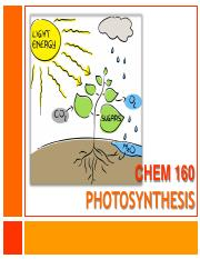 16_Photosynthesis