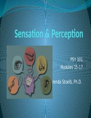 PSY101 Sensation  Perception