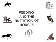 Chapters 23 HORSES handouts