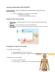 Anatomy and Physiology FINAL REVIEW[1]