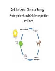 CH 6 Cell's & Chemical Energy-1.pptx