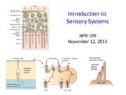 Lecture 14a_ Sensory Systems