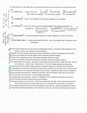 Circulating, and Respirating Notes and Worksheet