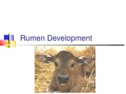 5 Rumen Development
