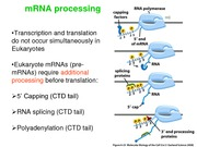 28 - RNA Processing; Splicing