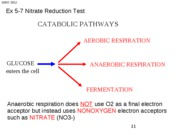 MBIO 3812 Ex 5-7 Nitrate Reduction Test
