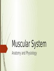 Muscular System_PE_Report_Tumacole.pptx