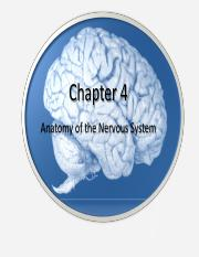 Week 3-Anatomy of Nervous System