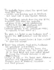 Notes on HowThe Brain Is Organized