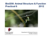2012%20Practical%206%20Arthropoda%20I.pptx