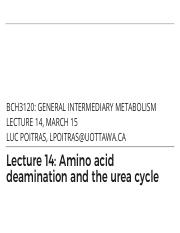 14 - AA Deamination + Urea Cycle