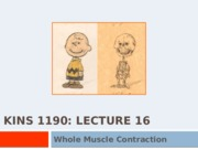 Student KINS 1190 Lec 16 Whole Muscle Contraction.pptx