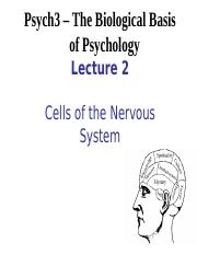 Lecture 2 - Cells of the Nervous System.ppt